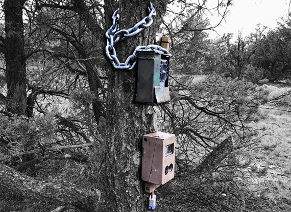 Thieves & Trailcameras