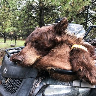 Brian Curtis NM Black Bear2