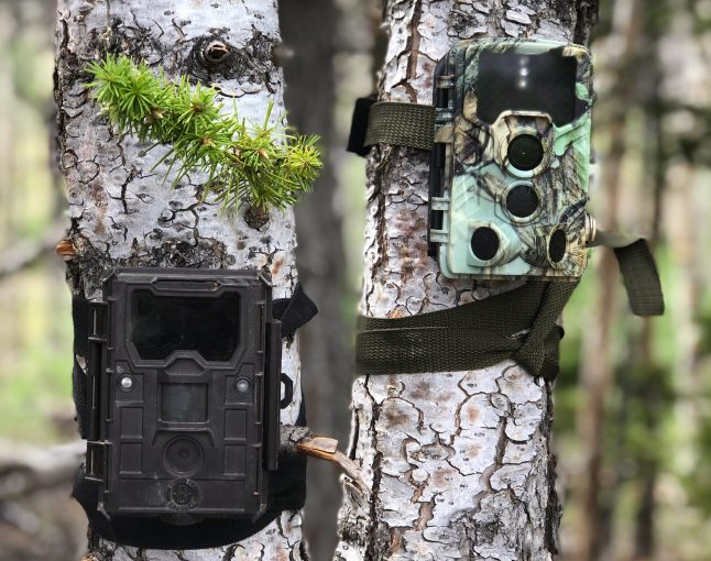 Trail Camera Placement & Location